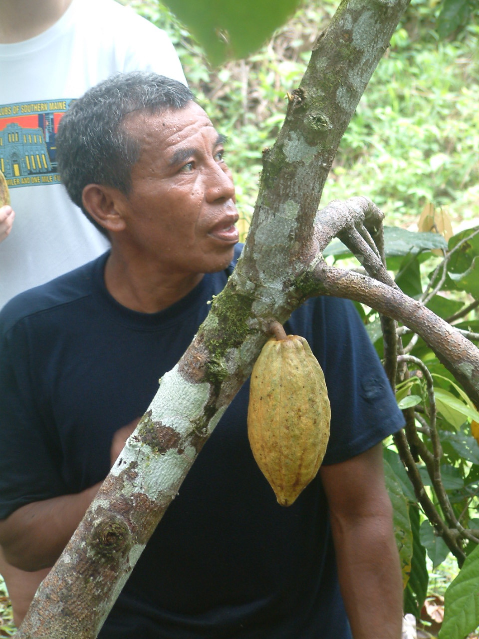 Where does chocolate come from? Eladio Pop's jungle farm ...