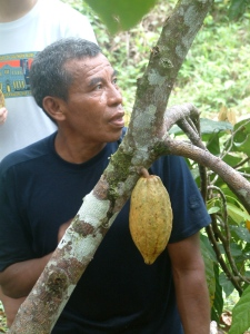 Where does chocolate come from? Eladio Pop's jungle farm.