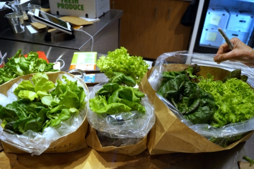 The Corner Stalk Farm located in East Boston, grows all of its lettuces in recycled shipping containers using hydroponics and clean technology year-round.